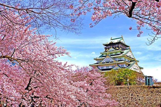 賞花兼賞屋 大阪民宿投資近捷運